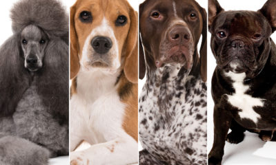 10 hottest Dog breeds of 2020 have been introduced