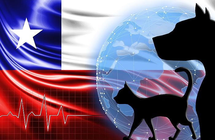 active chilean market for the launch of new premium pet