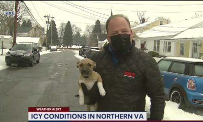 adorable puppy crashes reporter's weather report on live tv! |
