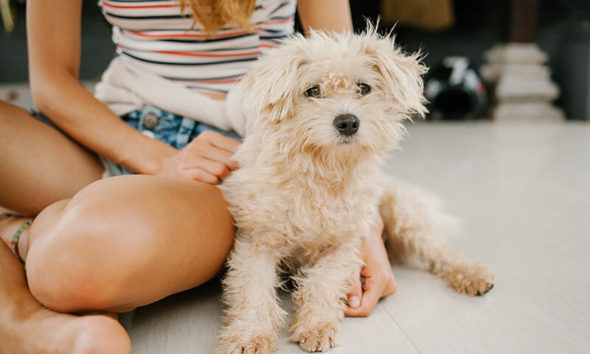 americans adopted fewer pets from animal shelters in 2020