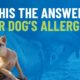 beef colostrum for dog allergies