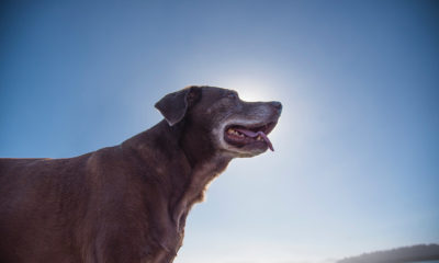 cognitive decline in aging dogs: what you should know