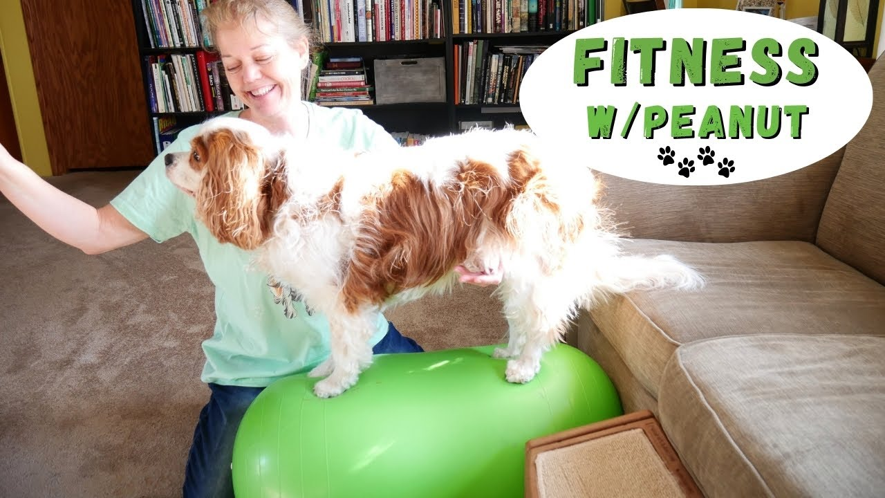 dog rehabilitation physical therapy exercise with the peanut | chiari