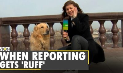 dog steals microphone & hearts | moscow reporter | caught