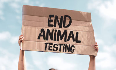 dogs used in toxicity tests