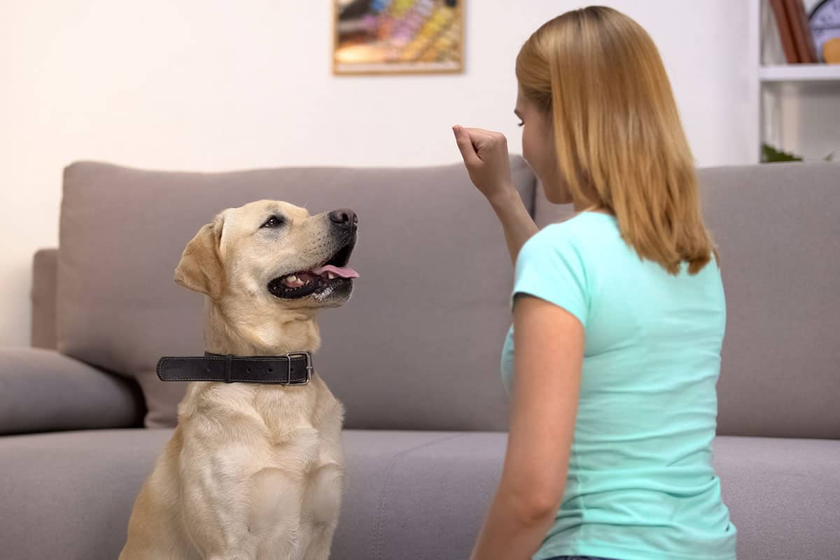 five basic dog commands your dog needs to know