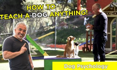 how to teach a dog anything! with cesar millan!