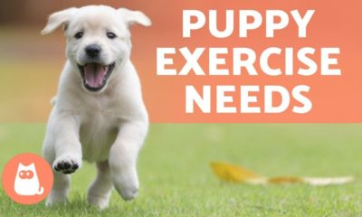 how much exercise do puppies need? 🐶🎾 find out!