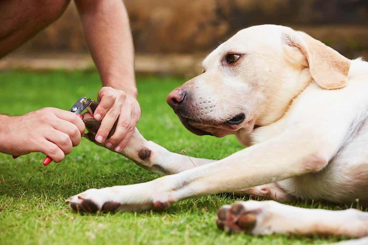 how to clip a dog's nails when the dog is