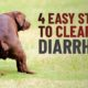 how to stop dog diarrhea: simple home remedies