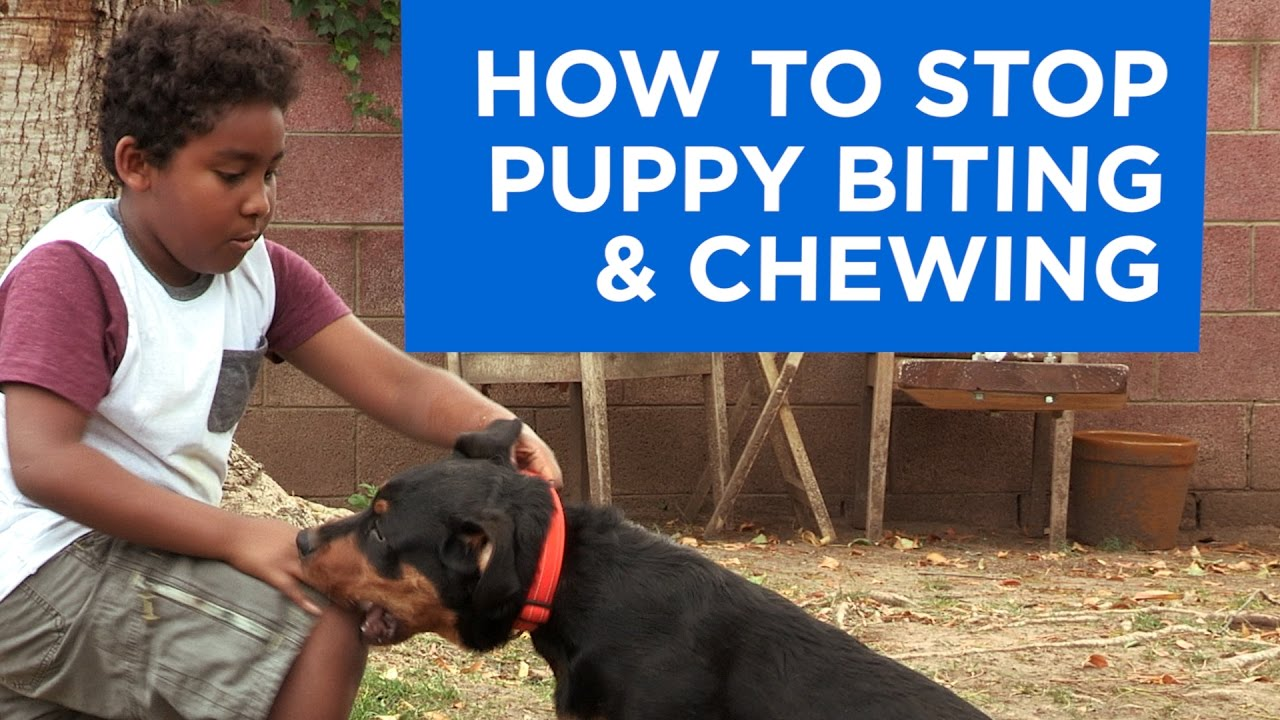 how to stop puppy biting and chewing