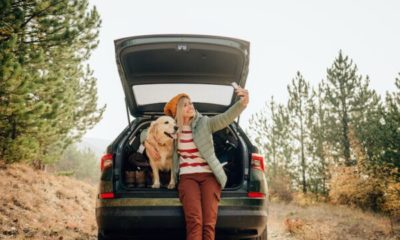 make safe decisions using your dog's social media dogster