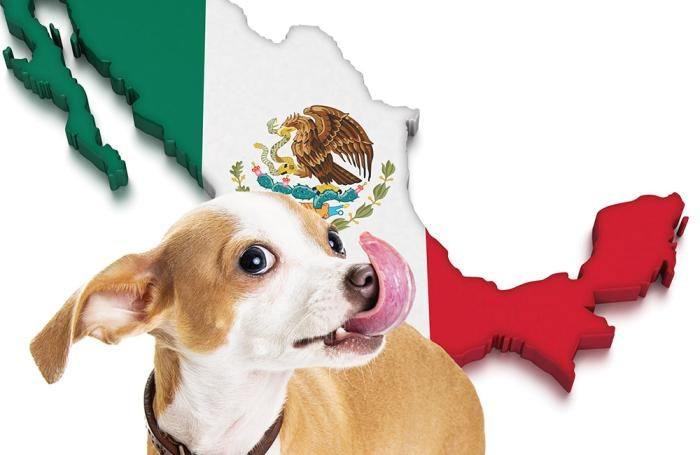 mexican pet food manufacturers find an up and coming channel
