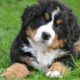 the 10 hidden superpowers of dogs