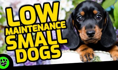 top 7 low maintenance small dog breeds