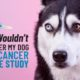 why you shouldn't volunteer your dog for cancer vaccine research