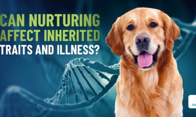 your dog's genes are not his destiny |
