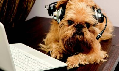 10 podcasts to bark dogster