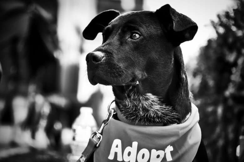30 questions to ask when adopting a dog
