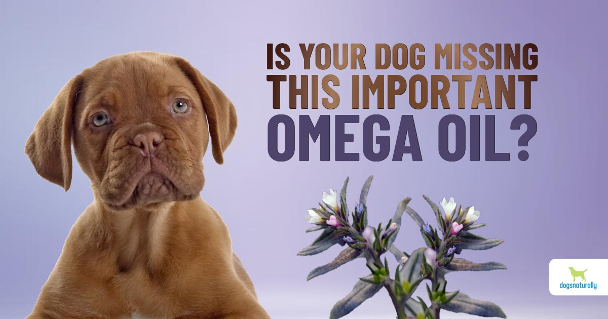 ahiflower oil: why your dog needs it