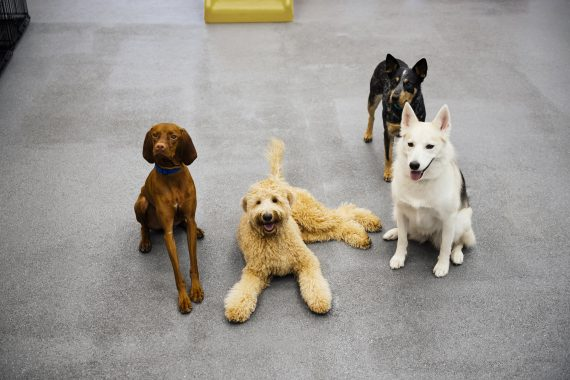 benefits of dog day care for puppies of all ages