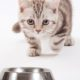 "cats are ""underserved"": will the pet food industry fix this?"