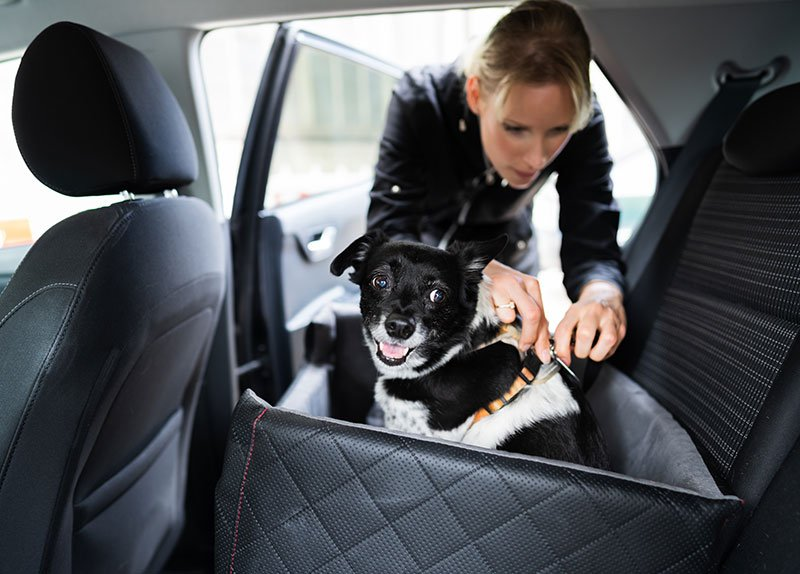 drive your newly adopted dog home