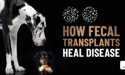 fecal transplant: is it right for your dog?