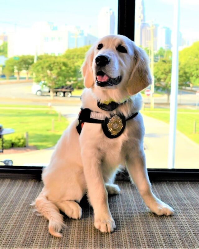 fire brigade therapy dog sniffs out the stress of their