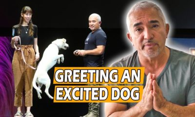 how to calm an excited dog (first meeting) live