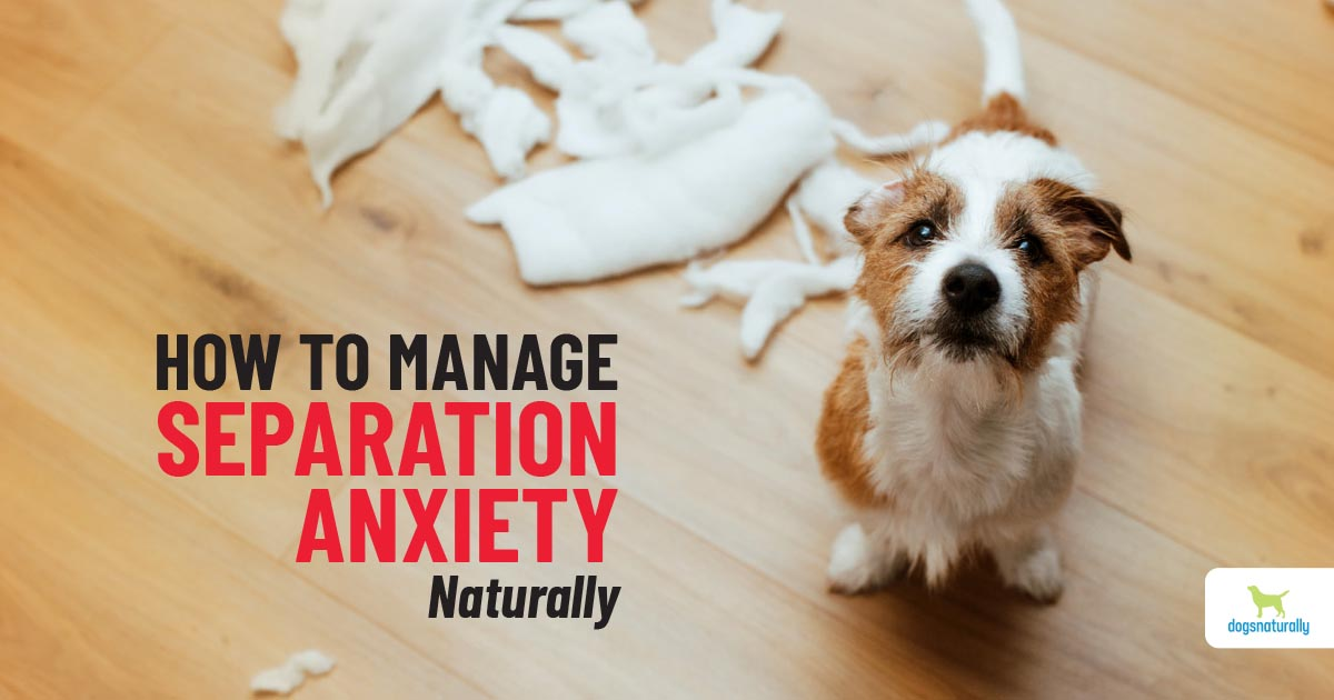 how to help a dog with separation anxiety