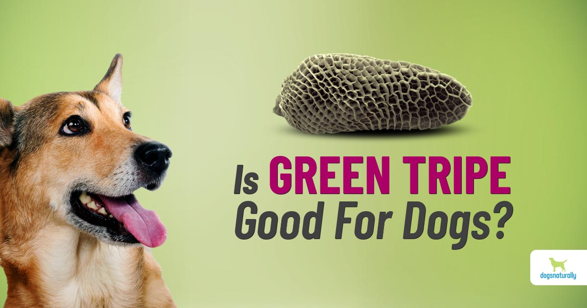 is green tripe good for your dog?