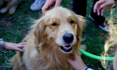 petting dogs improve the thinking skills of stressed students