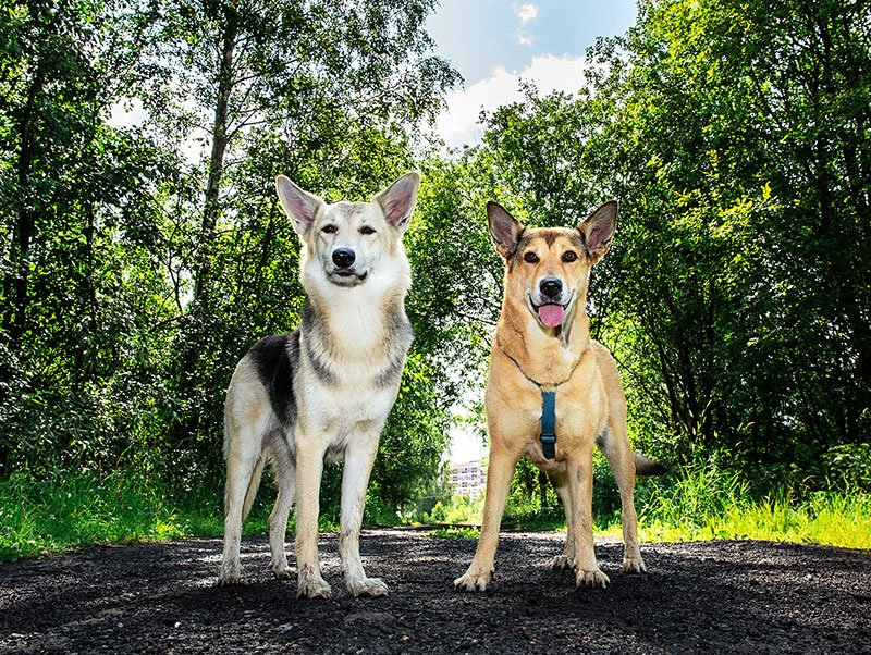 should i have a second dog?