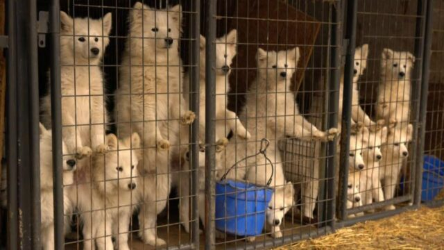 texas puppy mill bill passes the house, but officials fight