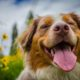 these 10 dogs can cause the most damage