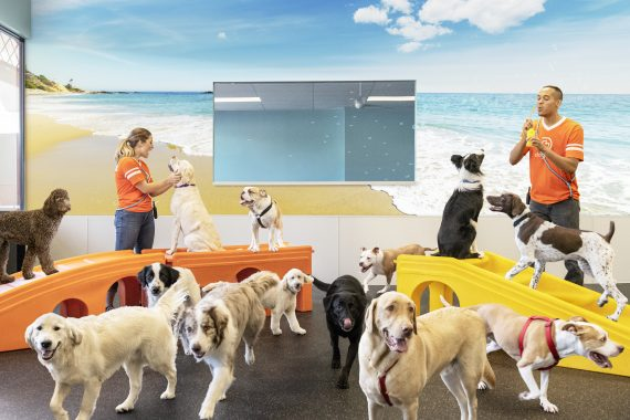 understand your dog's behavior in the playroom
