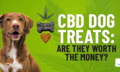 why cbd treats aren't the best choice for your dog