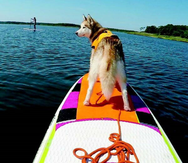 would you like to try a dog adventure on the