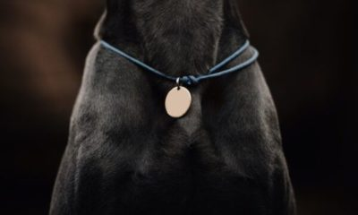 your guide to dog tags dogster