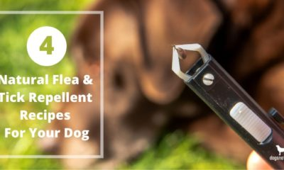 4 natural flea and tick repellent recipes for your dog