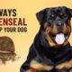 8 ways to use turmeric for your dog