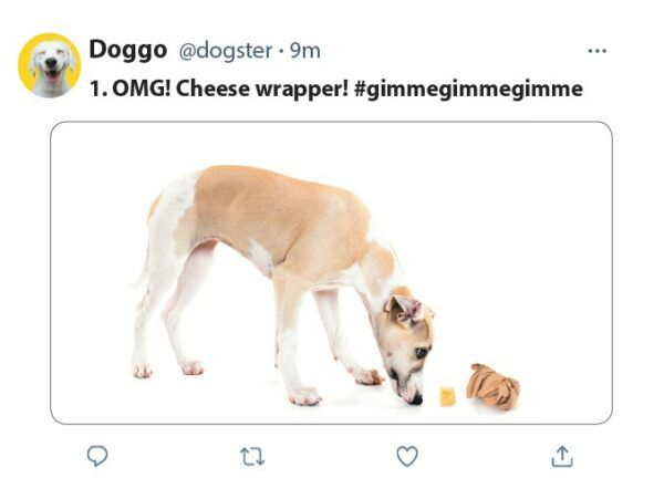 9 things dogs would tweet if they could dogsters