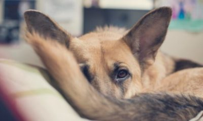 9 tips to keep your dog calm and safe on