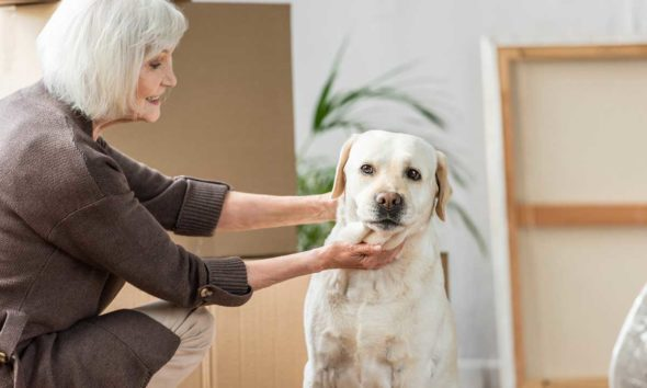 can you shave a lab? – why shaving a lab