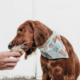 delicious and refreshing dog treats for the summer