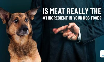distribution of the ingredients in your dog's food!
