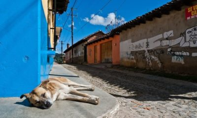 growth driver of the pet food market in latin america,