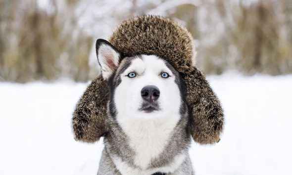 help for your dog's dry skin