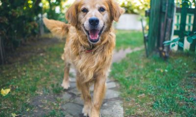 home remedies for joint pain relief in dogs